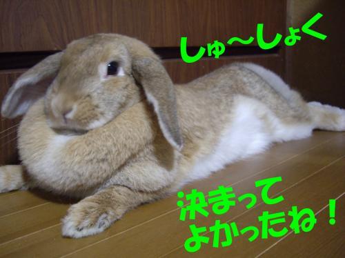 shu_convert_20080627205948.jpg
