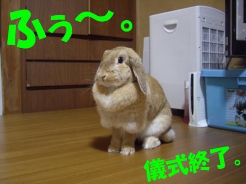 shuuryo_convert_20080626224316.jpg