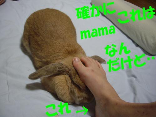 tashikani_convert_20080707221722.jpg