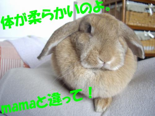 yawara_convert_20080610235748.jpg