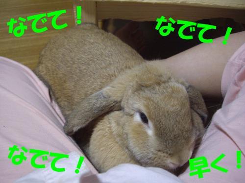 yotte_convert_20080608235300.jpg