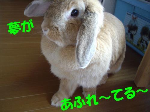 yume_convert_20080630212352.jpg