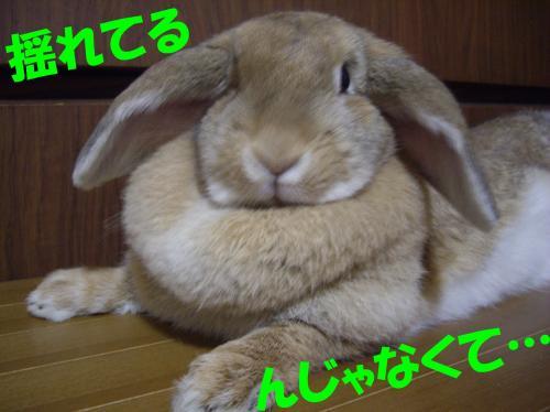 yure1_convert_20080623200734.jpg