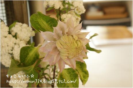 ベル・オブ・ウォッキングの開花