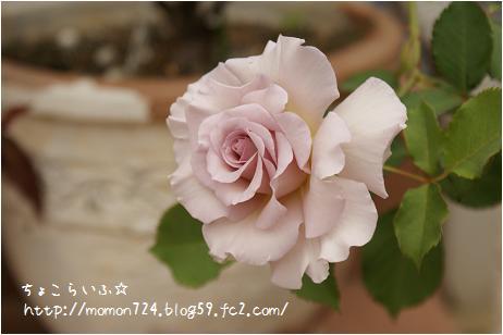 ニューウェーブの開花2