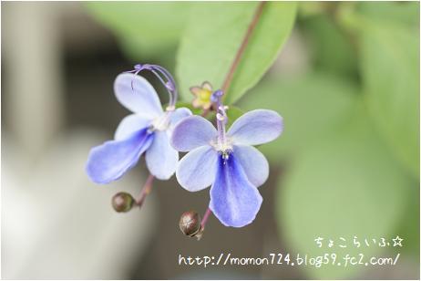 ブルーウィングのお花