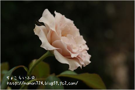 ニューウェーブの開花