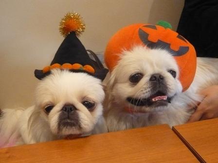 koma_halloween09.jpg