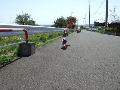 2008_0927小春2009 散歩+小春プル0025f