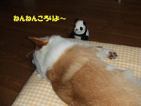パンダの子守唄