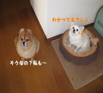 yukikanna