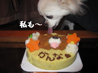 dゆきケーキ
