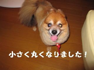 #かんな2