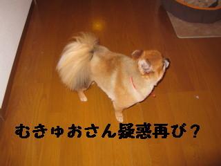 #かんなむきゅおさん