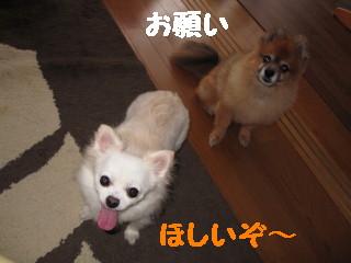 IMG_1304.jpg