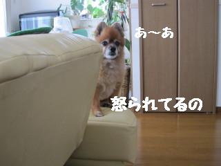 IMG_1645.jpg