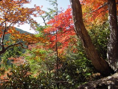 IMGP2263_下山路の紅葉
