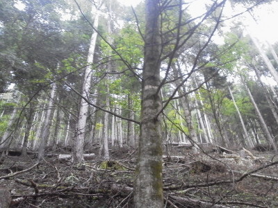 3 p1216に向かう林400 P1001005