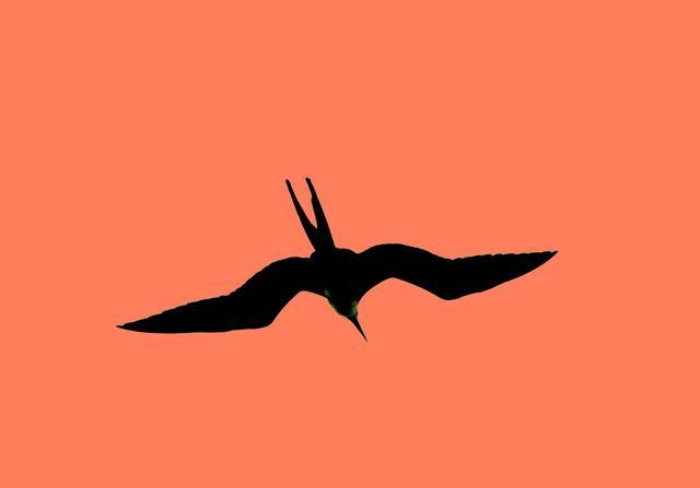 birdCN1380.jpg