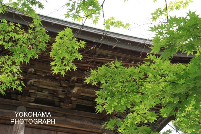 IMG_6806_円覚寺