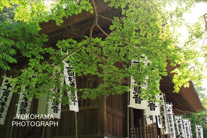 IMG_8030_杉本寺