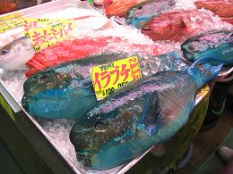 10.19沖縄魚