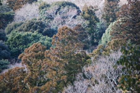 5984樹木
