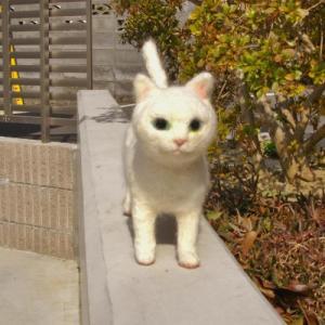 20120409_白猫
