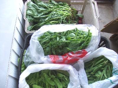 2009.05.10野菜