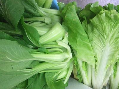 2009.05.16朝採り野菜1