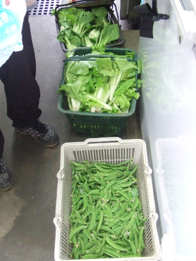 2009.05.22本日の朝採り野菜