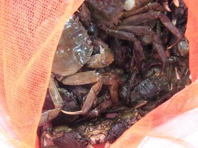 北海道 川蟹