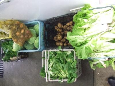 2009.06.12朝採り新鮮野菜