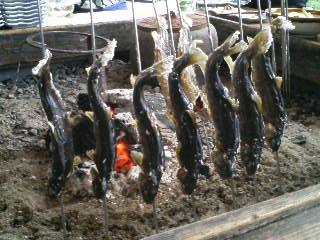 岩魚塩焼き