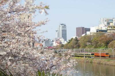 総武線と中央線と桜