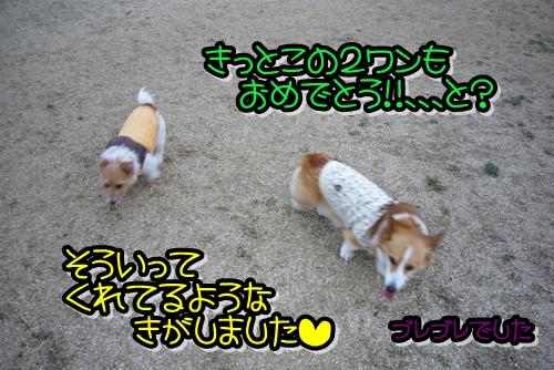 2009_0128_165346-P1010882.jpg