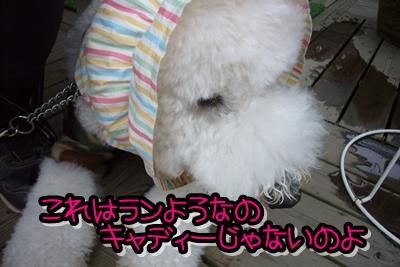 2009_0128_170128-P1010888.jpg