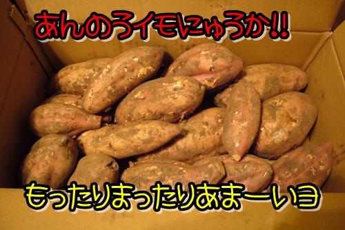 2009_0211_171048-P1020006.jpg