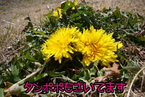 2009_0221_115731-P1020123.jpg