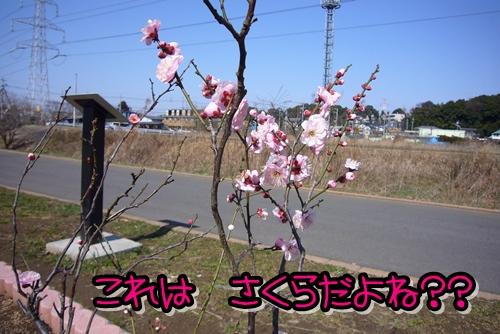2009_0221_122356-P1020127.jpg