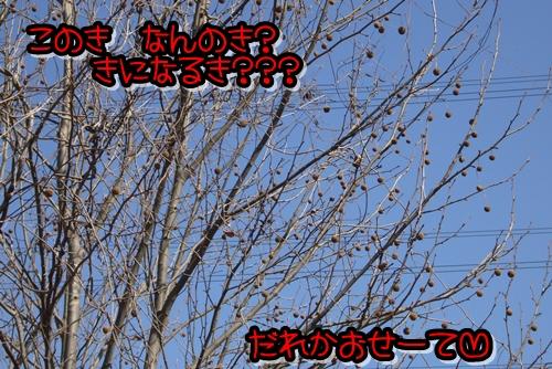 2009_0221_122649-P1020129.jpg