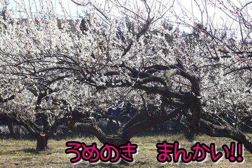 2009_0221_124120-P1020133.jpg