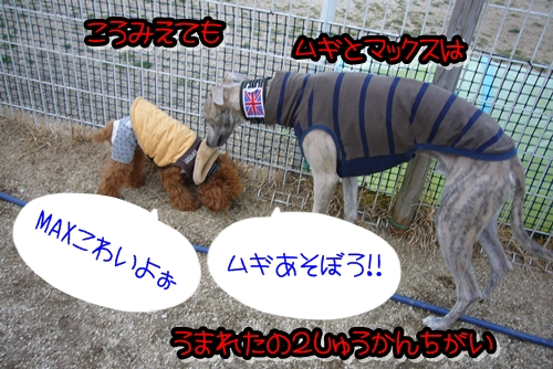 2009_0222_165950-P1020139.jpg
