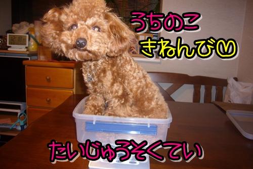 2009_0318_004056-P1020242.jpg