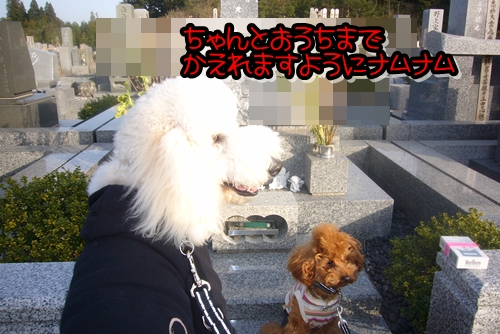 2009_0318_163843-P1020302.jpg