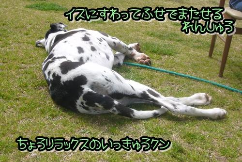 2009_0322_115423-P1020324.jpg