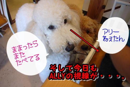 2009_0409_124843-P1020521.jpg