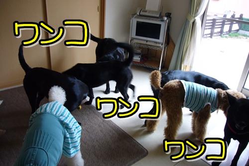 2009_0416_130215-P1020545.jpg
