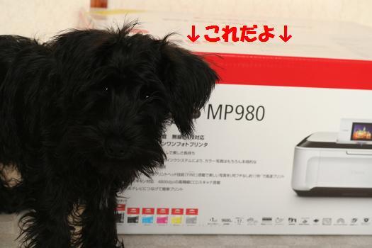 IMG_5039a.jpg