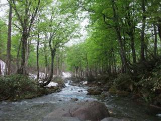 nature_2_20090526001114.jpg